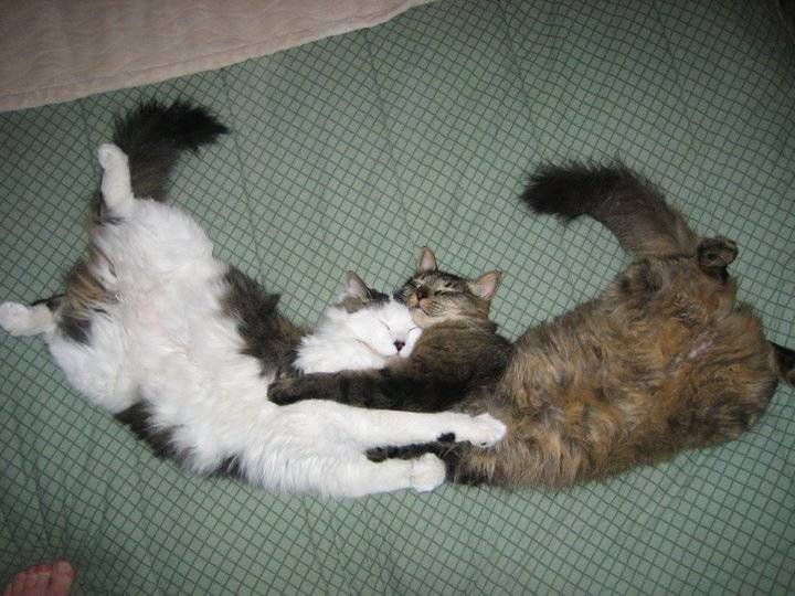 Cats presenting a very nice sleeping position