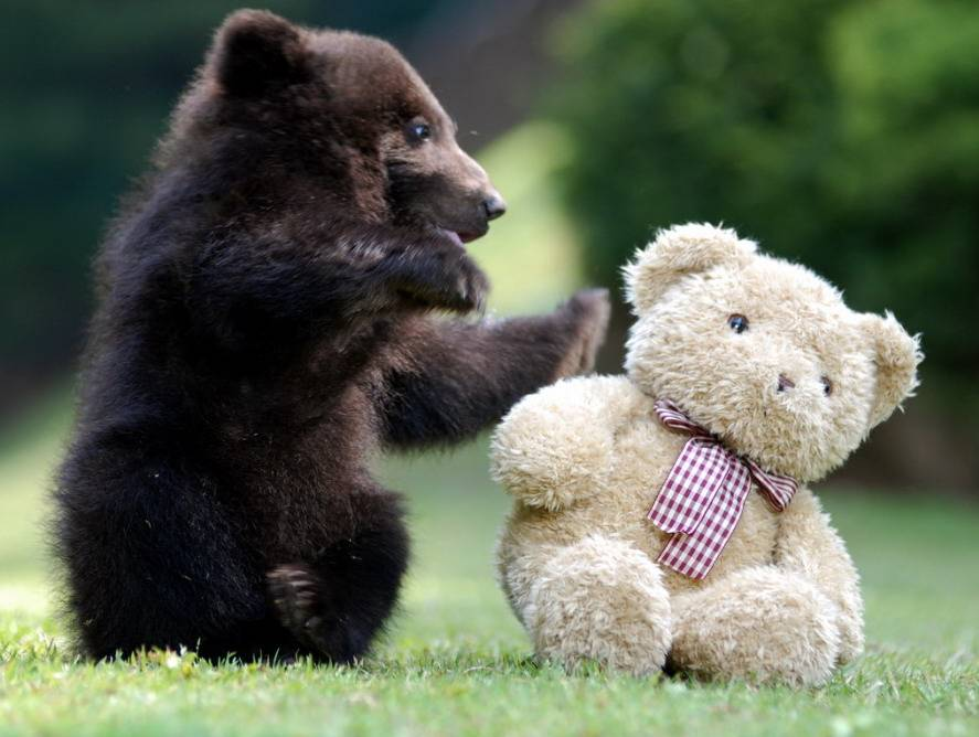 Cute little bear playing with a Teddy Bear