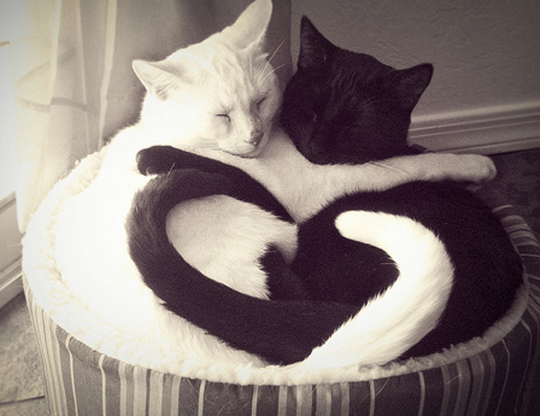 black and white cat hugging forming a heart
