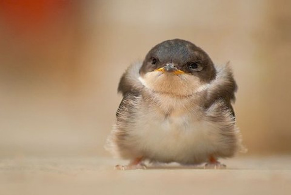 funny happy bird