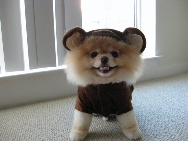 Cute happy puppy
