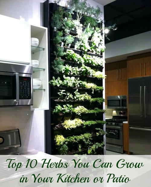 Herbs You Can Grow In Your Kitchen Or Patio