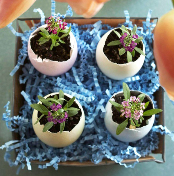 Easter diy eggshel plants