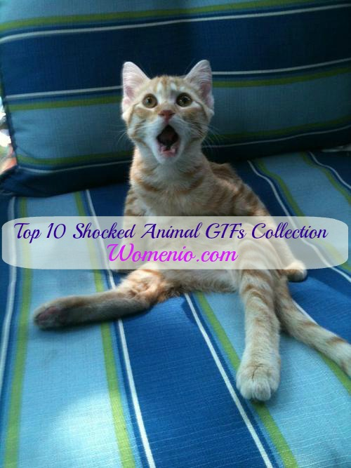 Top 10 Funniest Shocked Animals GIF Collection