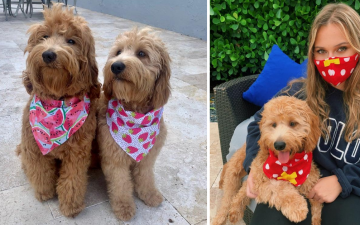 dog bandana and matching face mask