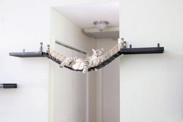 cat on a cat bridge