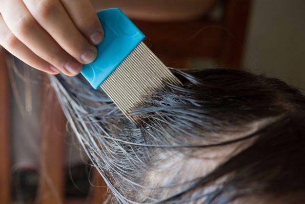 will haircolor kill lice
